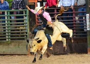 suhls rodeo bull riding