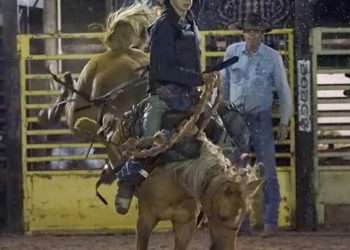 suhls rodeo bronco riding