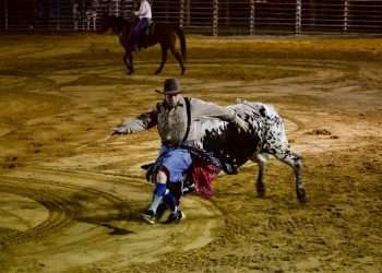 rodeo-clown-running-from-bull