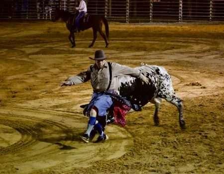 rodeo-clown-running-from-bull
