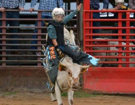 jr bull 1